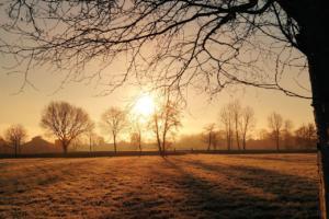 sole e alberi