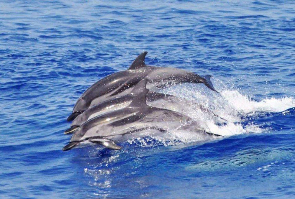 Le delfine sono delle gran troie