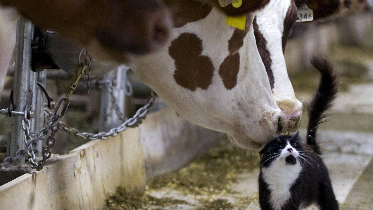 Fatti mandare dalla mamma a prendere il latte