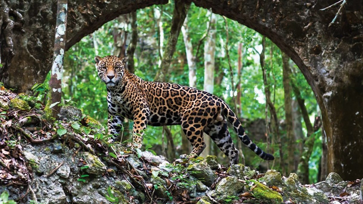 Vicino alle rovine Maya