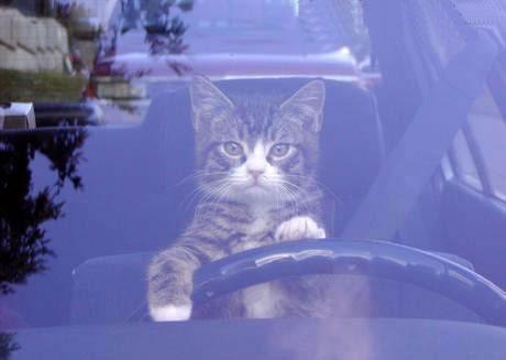 """Vita da gattara: i gatti e il """"pilota automatico"""""""