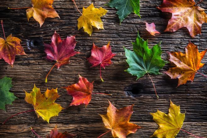 Sopravvivere all'autunno. E agli open day.