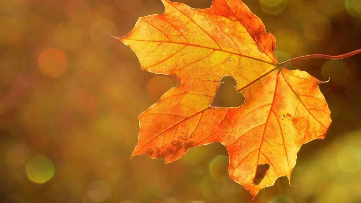 L'autunno sta tornando. Siete pronte?